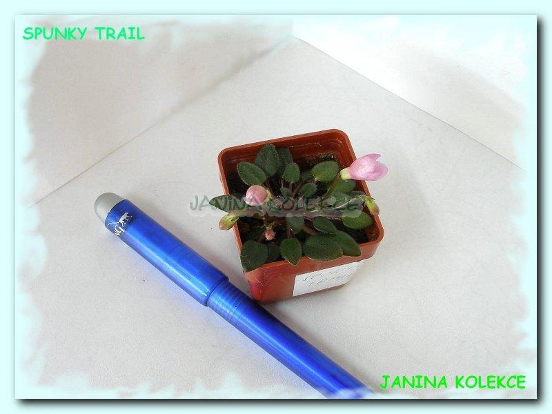 Spunky Trail (S. Sorano) Malé růžové zvonky. Malé tmavě zelené, lesklé, hladké listy. Miniaturní trailer